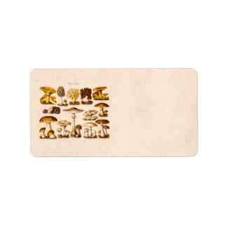 Plantilla de las setas de la variedad de la seta etiquetas de dirección