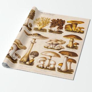 Plantilla de las setas de la variedad de la seta papel de regalo