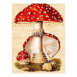 Plantilla de las setas del rojo de la seta de los tarjetas postales