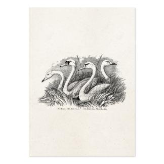 Plantilla de los pájaros de los cisnes del pájaro tarjetas de visita grandes