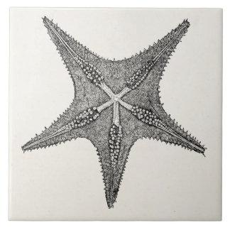 Plantilla de los pescados de la estrella de la azulejo cuadrado grande