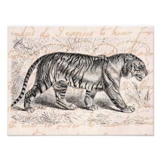 Plantilla de los tigres del ejemplo del tigre del  fotografía