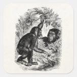 Plantilla del chimpancé del mono de los 1800s de calcomanias cuadradas