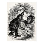 Plantilla del chimpancé del mono de los 1800s de tarjetas postales