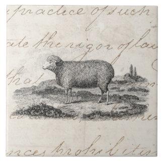 Plantilla del cordero de la oveja de las ovejas azulejo cuadrado grande