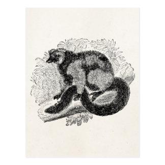 Plantilla del ejemplo de los Lemurs de los 1800s Postal