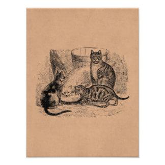 Plantilla del ejemplo del gato de los 1800s de los fotografías