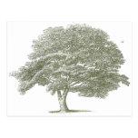 Plantilla elegante del gráfico del árbol del boda tarjetas postales