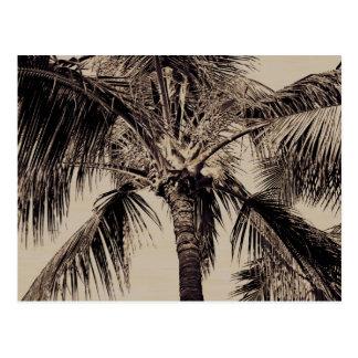 Plantilla hawaiana retra de la palmera de la sepia postales