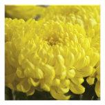 Plantilla macra de la fotografía del crisantemo am comunicado personal