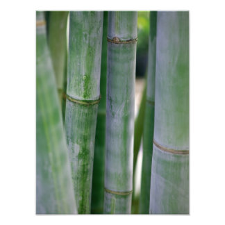 Plantilla modificada para requisitos particulares  fotografías