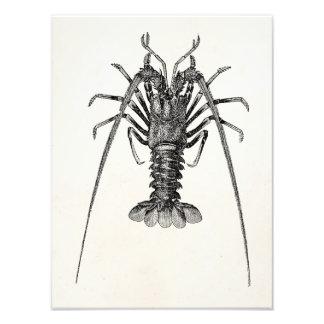 Plantilla personalizada de la langosta espinosa arte con fotos