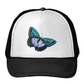 Plantilla púrpura azul colorida de la mariposa del gorras