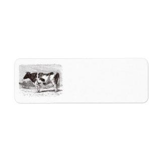 Plantilla retra de las vacas de la vaca holandesa etiqueta de remitente