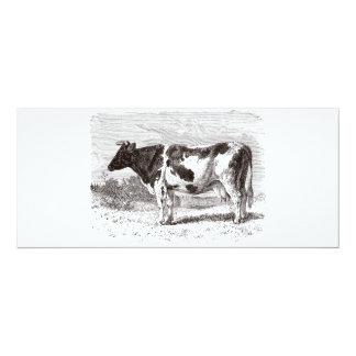 """Plantilla retra de las vacas de la vaca holandesa invitación 4"""" x 9.25"""""""