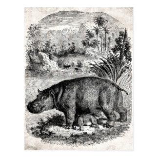 Plantilla retra de los hipopótamos del bebé del hi tarjetas postales