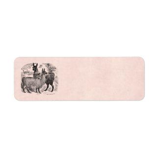 Plantilla rosada retra de las llamas de la llama d etiqueta de remite