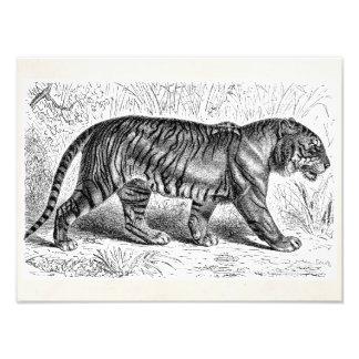 Plantilla salvaje de los tigres del ejemplo del ti fotografías