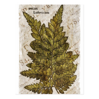 Plantilla tropical de los helechos botánicos tarjeta postal