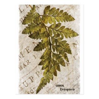 Plantilla tropical de los helechos botánicos postal