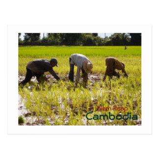 Planting rice in Prie Khmeang Village, Siem Reap Postcard