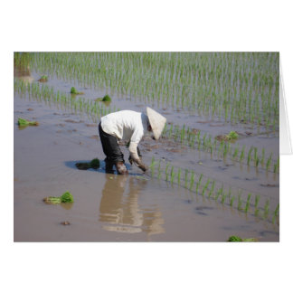 Planting Rice in the fields of Vietnam Card