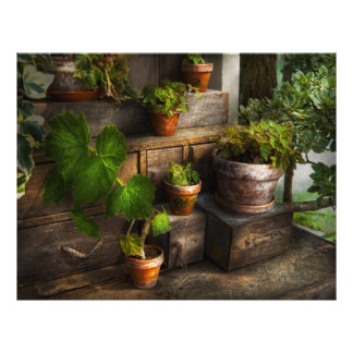 Plants - A summers soak Flyer