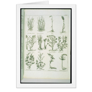 Plants from Culpeper's 'English Physician and Comp Greeting Card