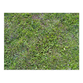 Plants Growing On Green Grassy Landscape Postcard