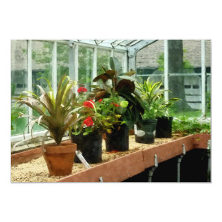 Plants in Greenhouse Card