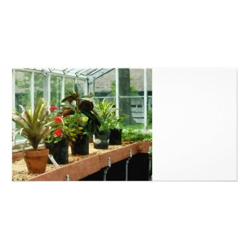 Plants in Greenhouse Photo Greeting Card