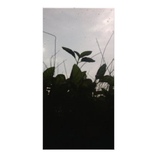 Plants in the shadow card