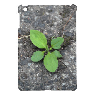 Plants on a tarred road. iPad mini cases