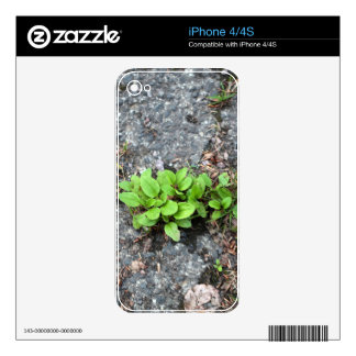 Plants on a tarred road. iPhone 4S decal