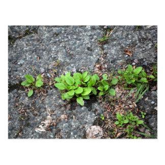 Plants on a tarred road. postcard