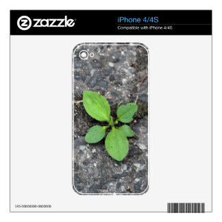 Plants on a tarred road. skins for iPhone 4S