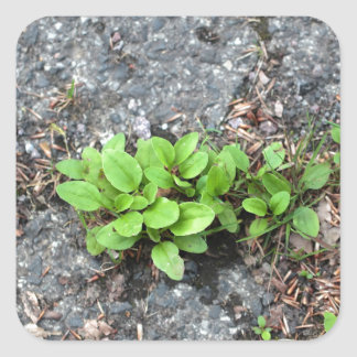 Plants on a tarred road. square sticker