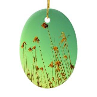 plants ornament