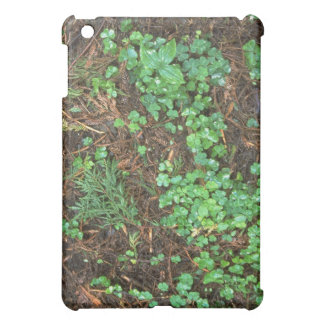 Plants - Redwood Sorrel - Redwood forest floor iPad Mini Cases