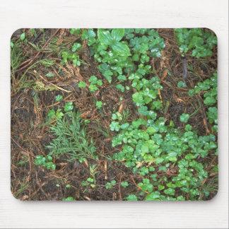 Plants - Redwood Sorrel - Redwood forest floor Mouse Pad