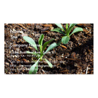 Plants Sprouts Dirt Business Card