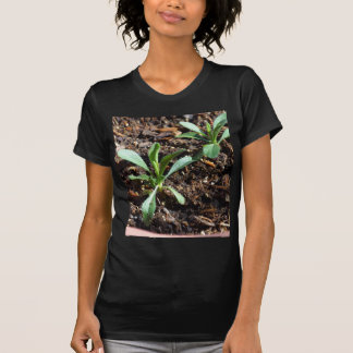 Plants Sprouts Dirt T-Shirt