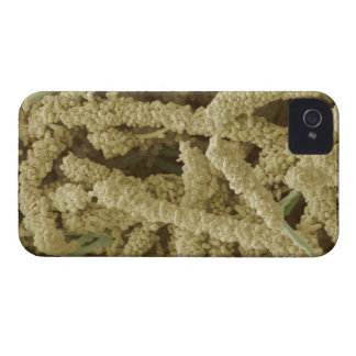 Plaque-forming bacteria, coloured scanning 2 iPhone 4 Case-Mate case