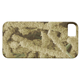 Plaque-forming bacteria, coloured scanning 2 iPhone SE/5/5s case