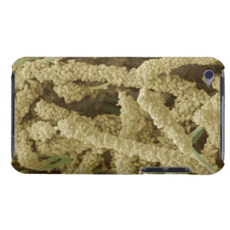 Plaque-forming bacteria, coloured scanning 2 iPod touch case