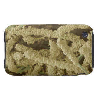 Plaque-forming bacteria, coloured scanning 2 tough iPhone 3 cover