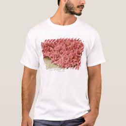 Plaque-forming bacteria, coloured scanning T-Shirt
