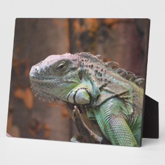 Plaque with colourful Iguana lizard