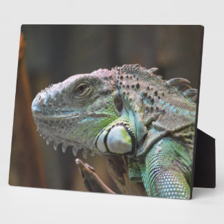 Plaque with head of colourful Iguana lizard