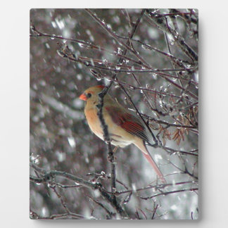 Plaque with photo of female cardinal